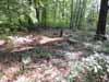 Mooresville Cemetery Plots