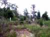 Browder-Mitchell Cemetery