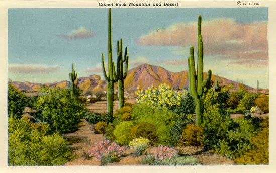 Penny Postcards From Maricopa County Arizona