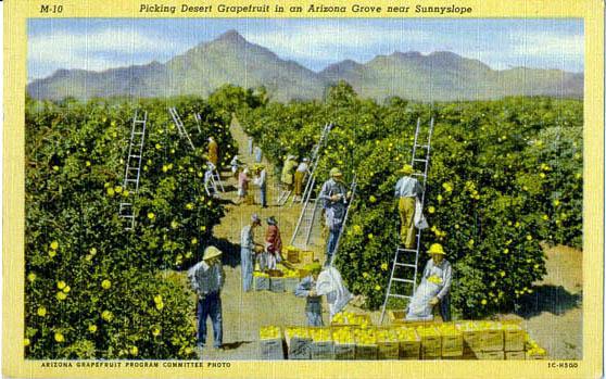 River Ranch Florida >> Penny Postcards from Maricopa County Arizona